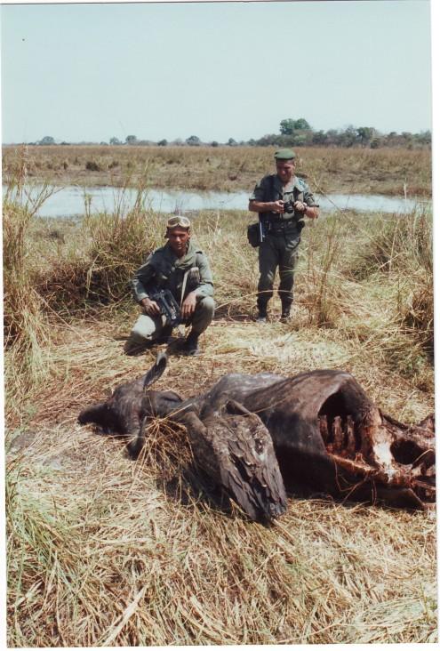 Büffel ZENTRALAFRIKANISCHE Republik