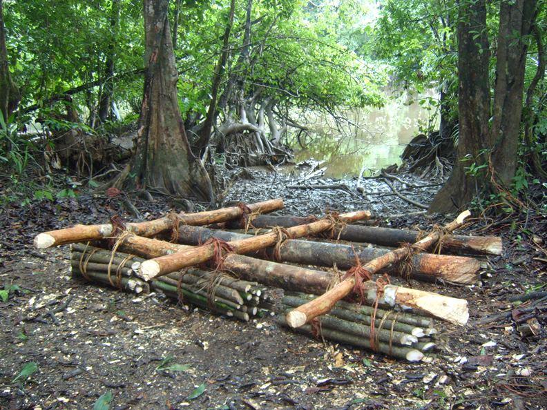 118. Floß aus Moucoumoucou Holz